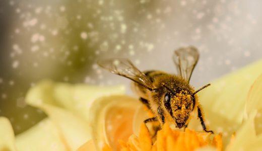 一流だからこそ、いざという時の雑学『蚊や蜂のいたずら』